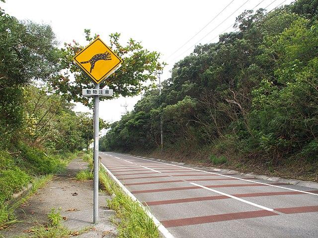ゼブラゾーンとヤマネコ注意の標識