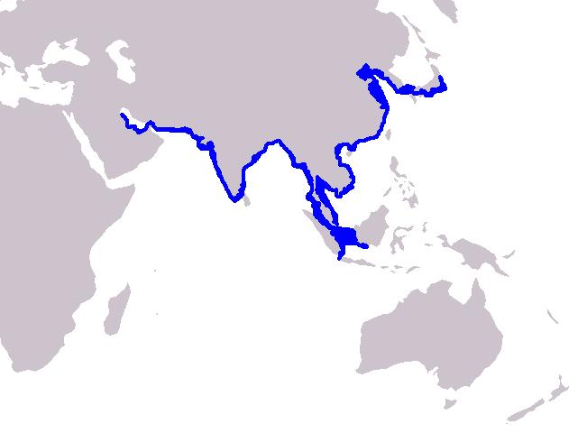 スナメリの生息海域