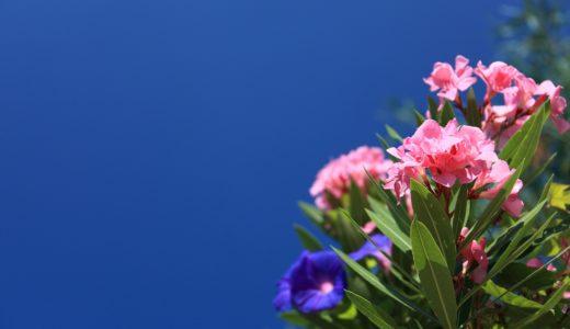【キョウチクトウ】身近な花に毒がある⁈強力な毒性と剪定の注意点
