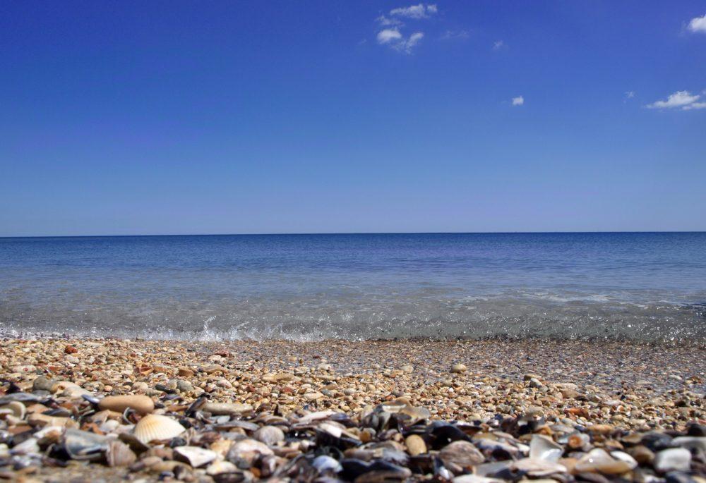 海岸に並ぶ貝殻