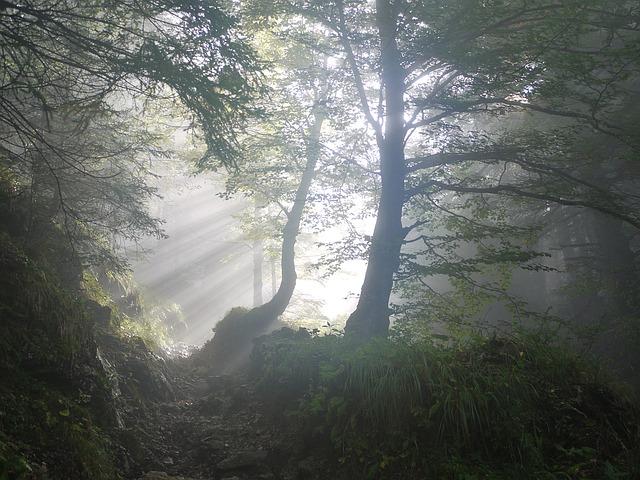 サンカヨウの生息地イメージ