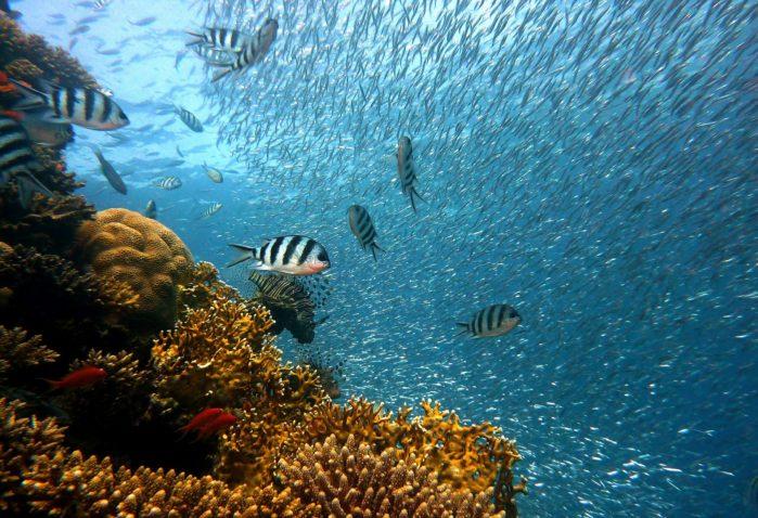 深海イメージ